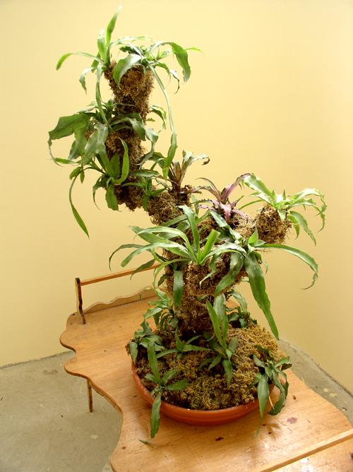 Выращивание эпифитов 13